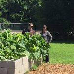 Two people looking at the community garden.